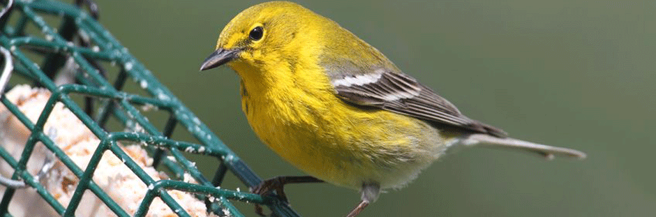 Wild Birding
