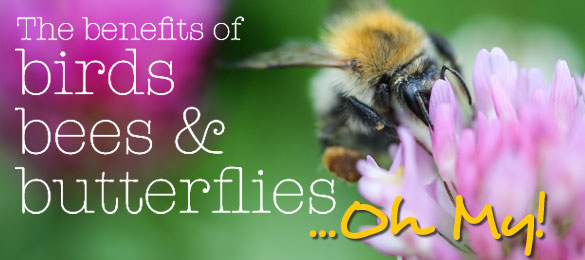 Bees-Website-Landing-Page-Banner