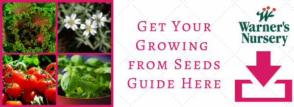 growing-from-seed-landing-page