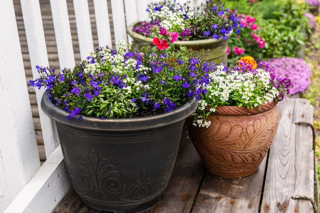 potted-annuals