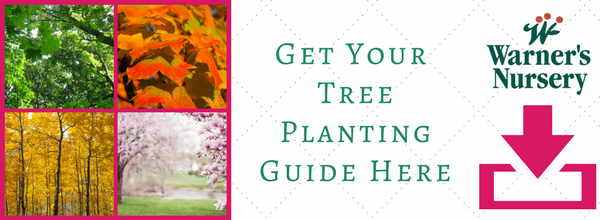 tree-planting-guide-landing-page