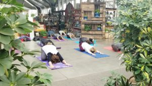 People practicing yoga at Warner's Nursery