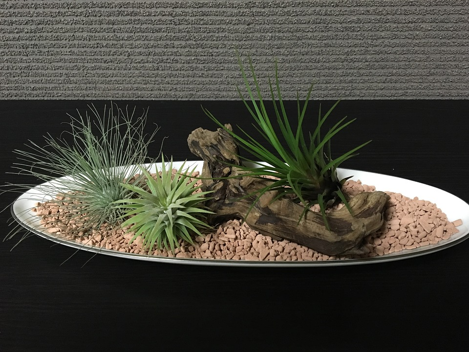 Air plants on a pebble filled bowl