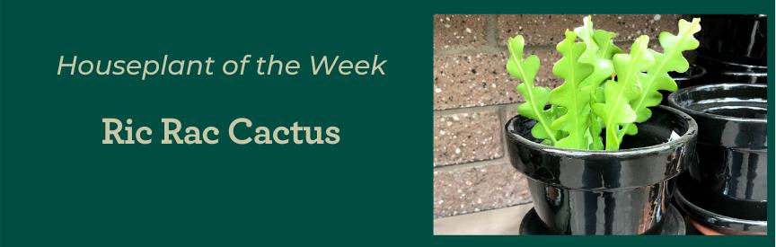 Ric Rac cactus